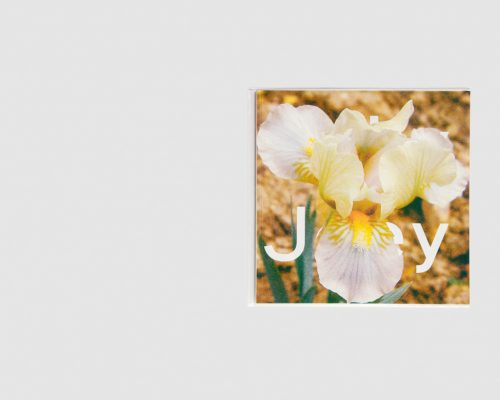Stéphanie Lagarde — IRIS Number 2: Jolly Joey