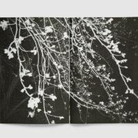 SKIN — Julie van der Vaart