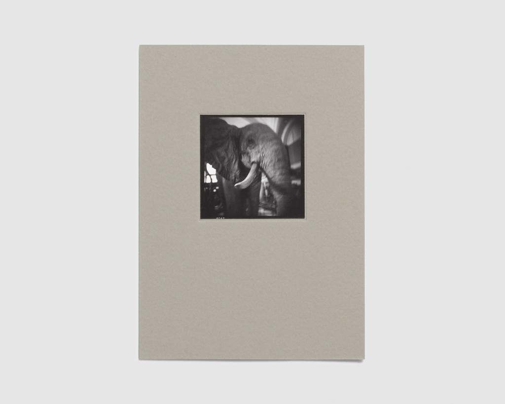 Leopold's Legacy - Edition - Elephant, Tervuren — Oliver Leu