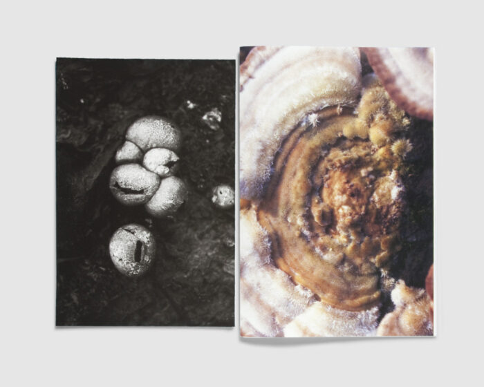 FUNGI — Collectors Edition — Dries Segers
