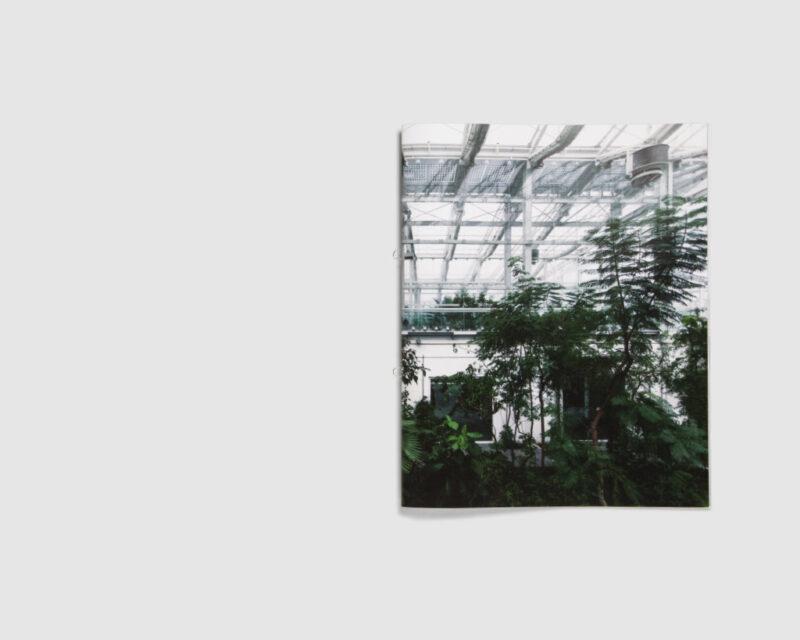Musa x paradisiaca L. — Martina Pozzan